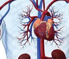 массаж на сердечно-сосудистую систему